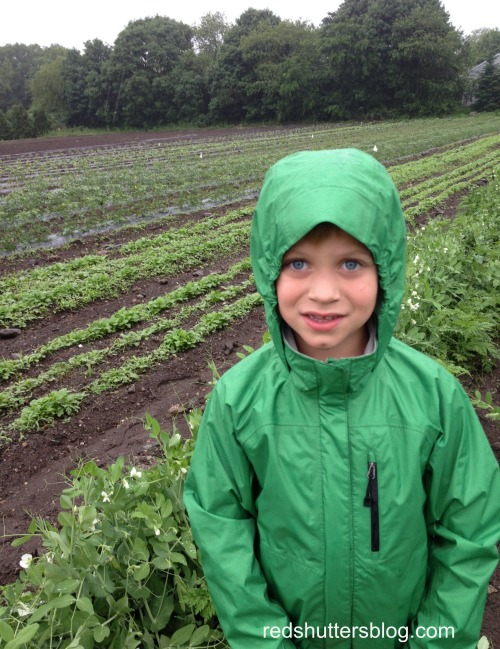 R during our first CSA visit this season  - Now that we've fully embraced summer, it's hard to remember back when we had to wear coats!